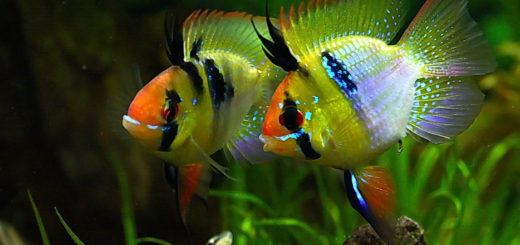 tropical-fish-care-beginners-guide