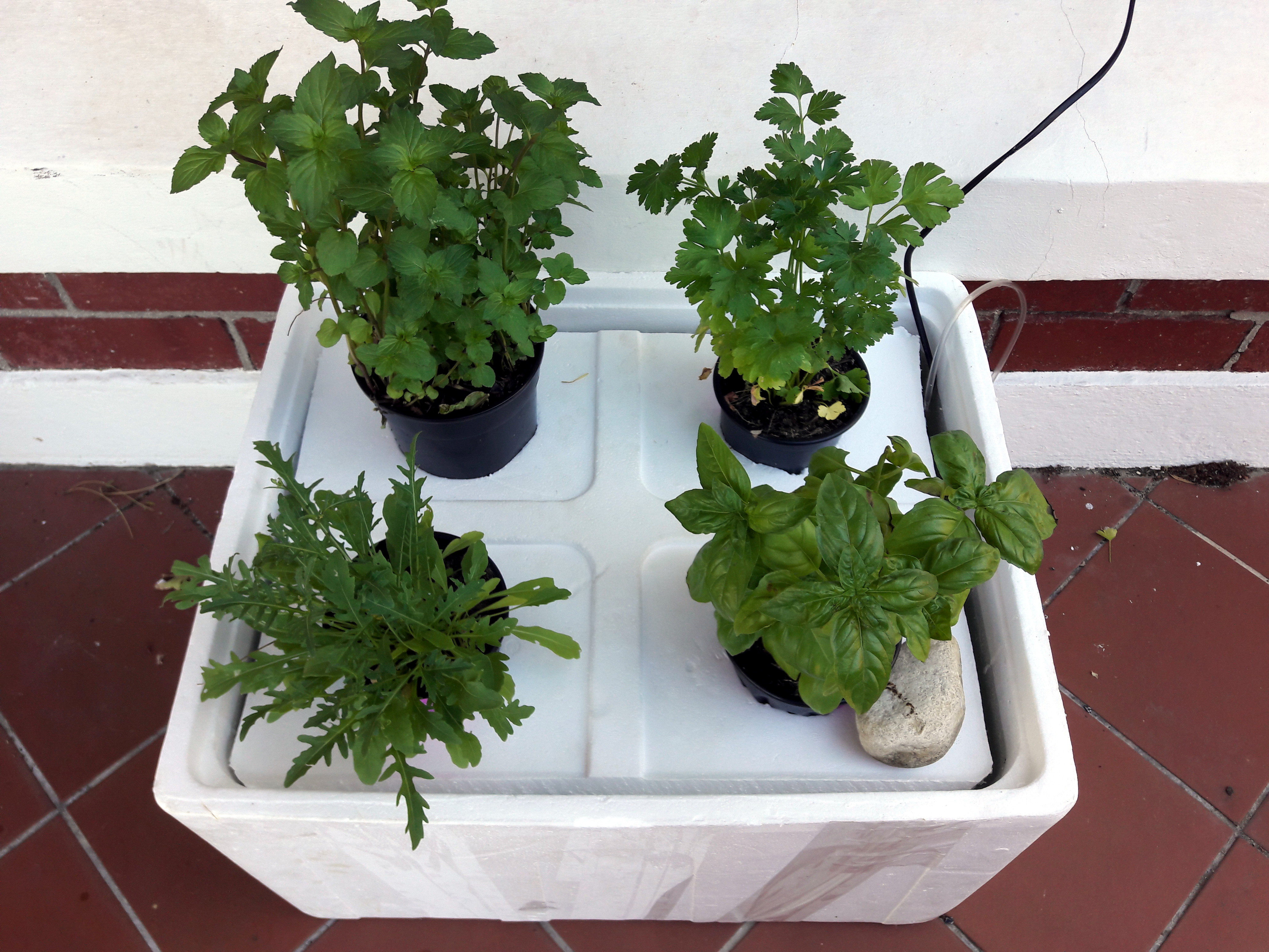 Basic Hydroponics System with Herbs
